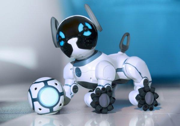 top-robot-2019